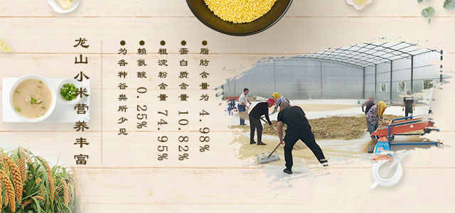 龙山小米营养丰富