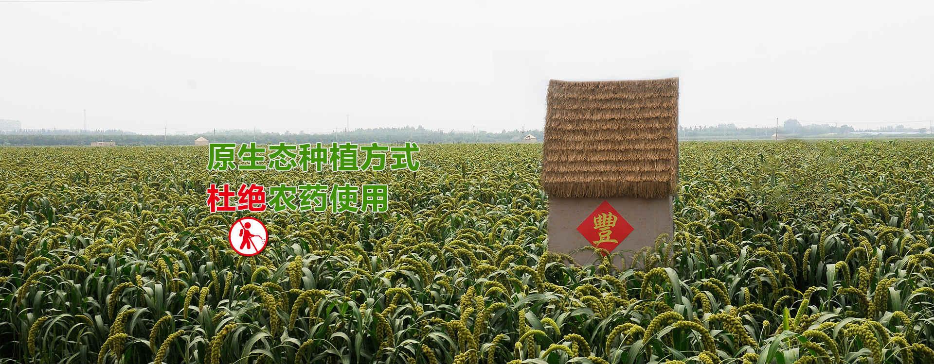 原生态种植方式 杜绝农药使用